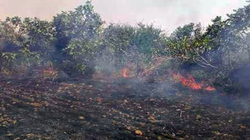 Terrorists burn Apple orchard in Kashmir